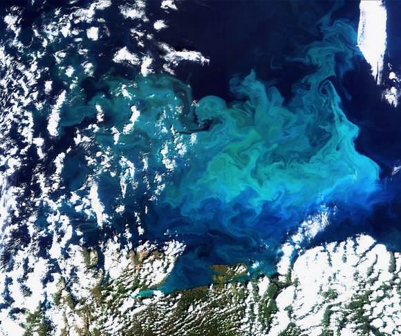 Phytoplankton Spring Bloom