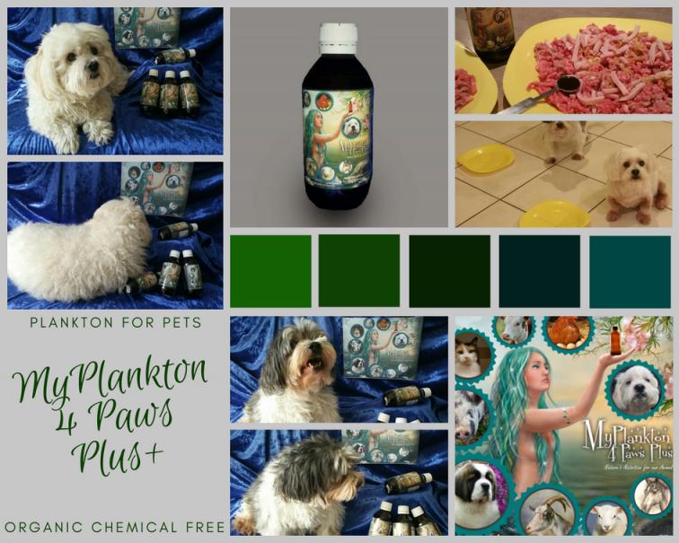 marine phytoplankton for pets, Plankton for Pets, myplankton 4 Paws Plus
