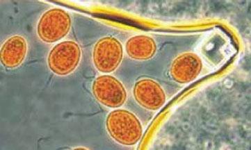 marine phytoplankton for pets, myplankton 4 Paws Plus