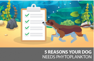 phytoplankton for your dog, plankton for pets, why your dog needs phytoplankton, plankton for pets