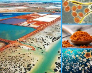 Dunaliella Salina Marine Phytoplankton Organically farmed in Australia