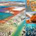 Concentrated Marine Phytoplankton