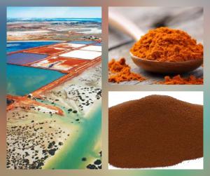 PanaSea Ingredient – Australian Marine Phytoplankton